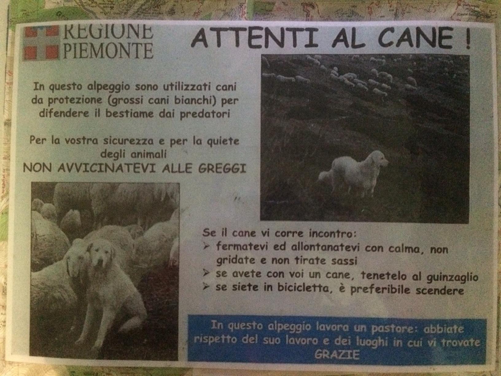 cartello cani pastore